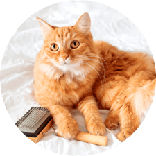 Cat Grooming Palm Harbor