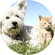 Pet Grooming Coupons Palm Harbor