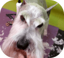 Dog Grooming Palm Harbor