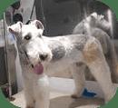 Tampa Dog Groomer
