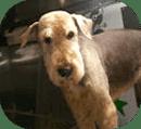 Palm Harbor Dog Groomer