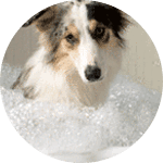 Mobile Pet Hair dematting for dogs and cats
