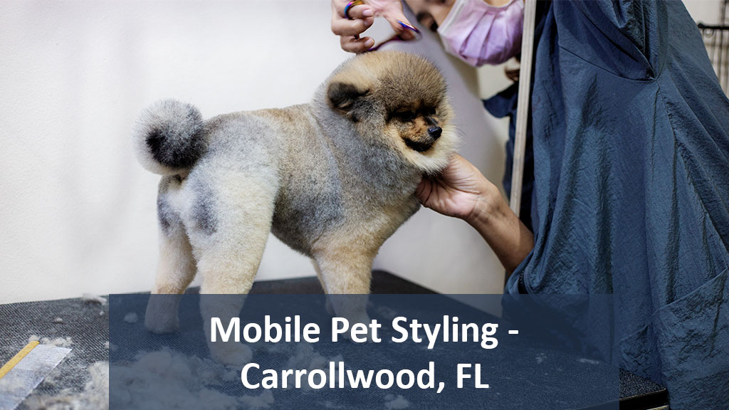 Featured Image For Angie's Mobile Pet Styling | Carrollwood, FL