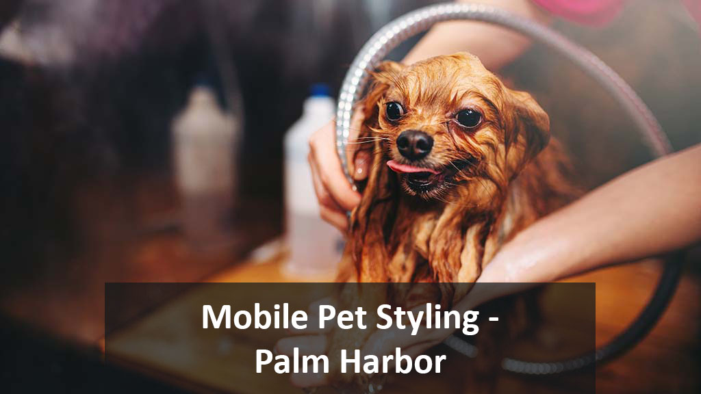 Angie's Mobile Pet Styling | Palm Harbor, FL