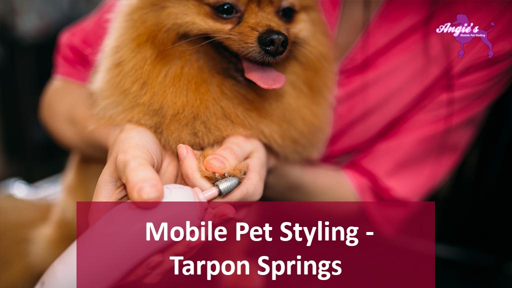 Featured Image Angie's Mobile Pet Styling | Tarpon Springs, Florida