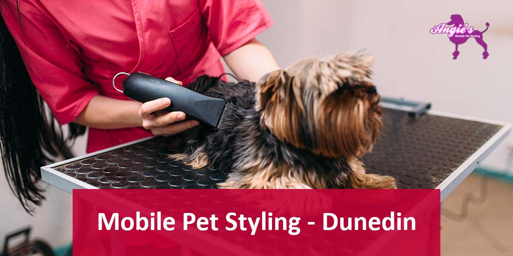Mobile Pet Stying Dunedin Florida