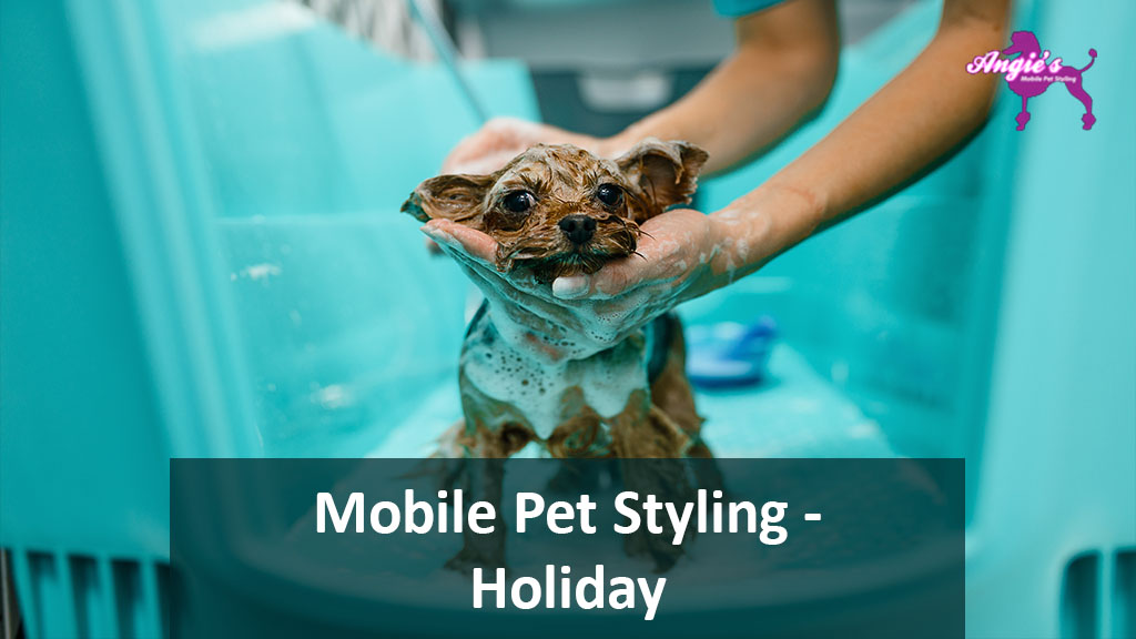 Featured Image For An Article Called Angie's Mobile Pet Styling | Holiday, FL