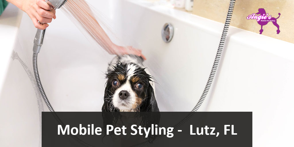 Featured Image Angie's Mobile Pet Styling | Lutz, FL