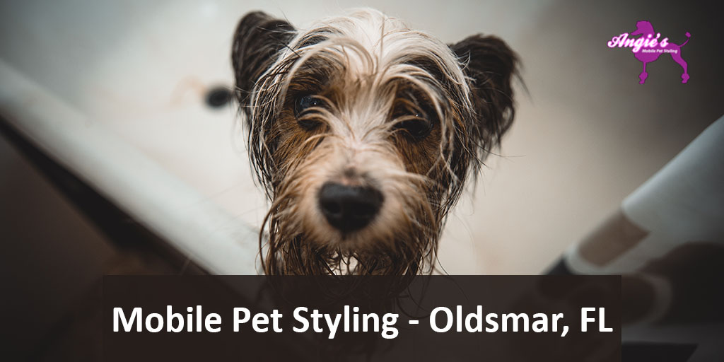 Featured Image For An Article Callde Angie's Mobile Pet Styling | Oldsmar, FL