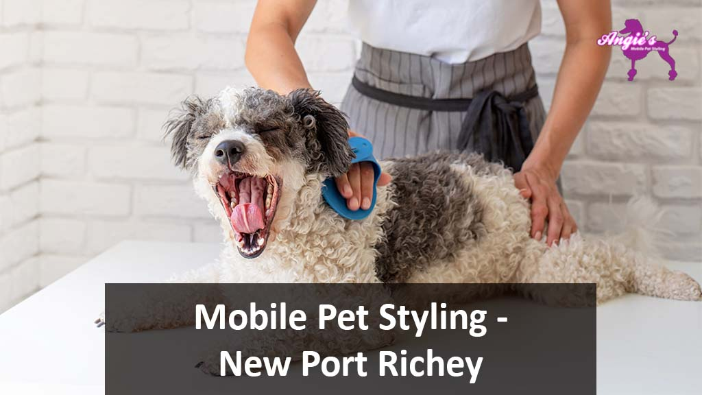 Featured Image For An Article Called Angie's Mobile Pet Styling | New Port Richey, FL