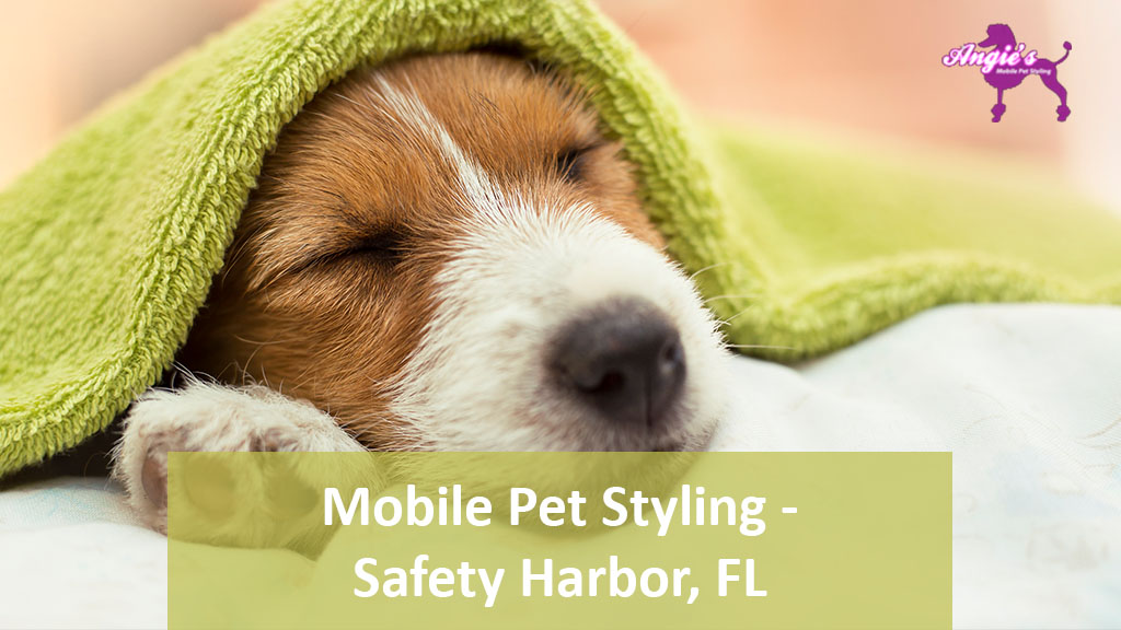 Featured Image For Angie's Mobile Pet Styling | Safety Harbor, FL