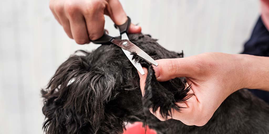 Image for Mobile Pet Styling | Oldsmar, FL