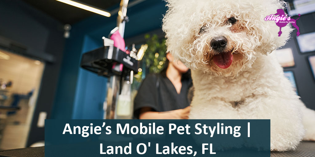 Angie's Mobile Pet Styling | Land O' Lakes